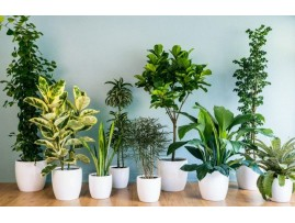 The 15 houseplants that you can hardly damaged