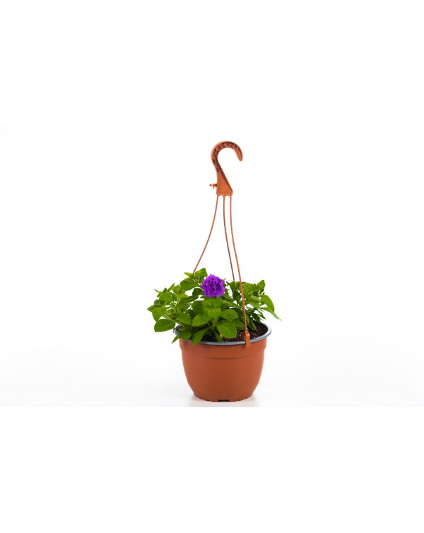 Petunia pot.19 - hanging basket