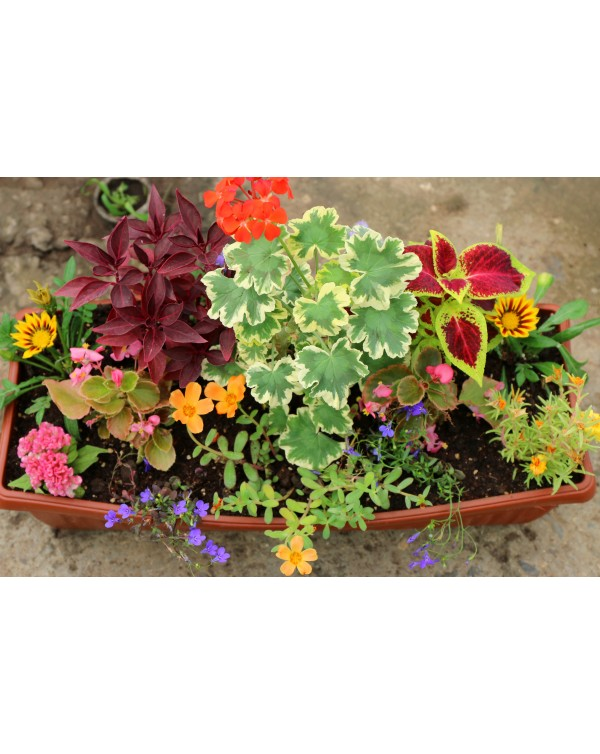 Flower pot arrangements
