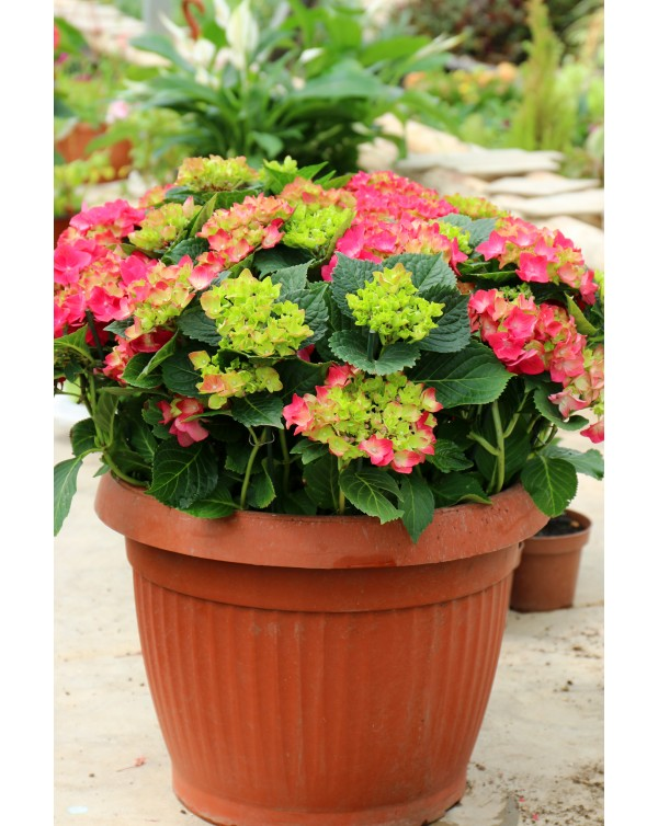 Mixed outdoor potted plants